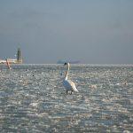 Gdynia, Poland - entrance to the marina